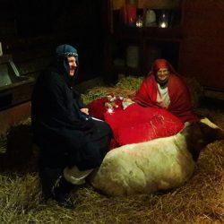 Kerststal 2016 bij de dierenweide
